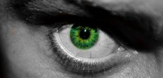Green Colour Eye Stock Image