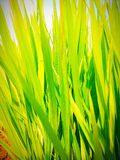 Green colour plants stock photo