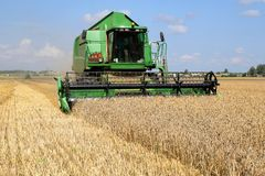 Green combine harvester removes wheat from the field on a sunny day royalty free stock image