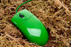 Green computer mouse on moss Royalty Free Stock Photos