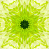 Green Concentric Flower Center. Mandala Kaleidoscopic design Royalty Free Stock Photography