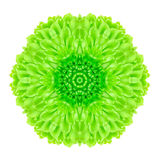 Green Concentric Flower Isolated on White. Mandala Design Stock Photo