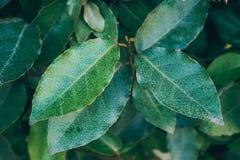 Green concept leaves on a bush Asian plants macro. Stock Photos