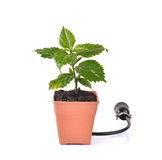 Green concept. Save world,plug on white background. 