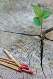 Green concept,Seedling growing in a timber and matches Royalty Free Stock Images