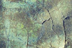 Green concrete wall Stock Image