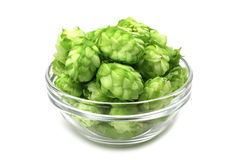 Green cones of hops in a glass container Royalty Free Stock Photo