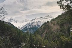 Green coniferous forest on a mountainside against a background of snow-capped mountain peaks. Background splash Royalty Free Stock Photos