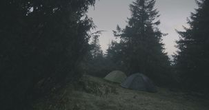 Green coniferous trees in the Carpathian Mountains in autumn in slow motion. stock video footage
