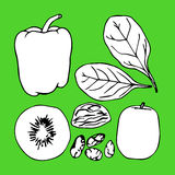 Green contour vegetables illustration. Kiwi. Spinach. Capsicum. Winter melon. Sultana fruits. Chia seeds Royalty Free Stock Images