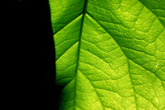 Green contrast. Green leaf with dark contrast royalty free stock images