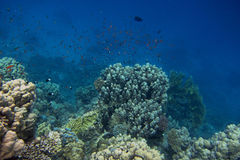 Green coral and blue sea Stock Photo