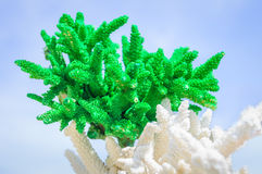 Green coral on blue sky Royalty Free Stock Photo