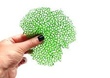 Green coral crepe lace food decoration in hand. On white background stock photography