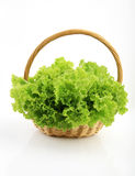 Green coral lettuce in a rattan basket Royalty Free Stock Photo