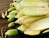 Without green corn, businesses generate income, including farmers, background with sun light shining. Green corn, businesses generating income, including stock photo