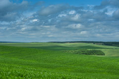 Green corn field and blue sky cloud outdoor shots Royalty Free Stock Images