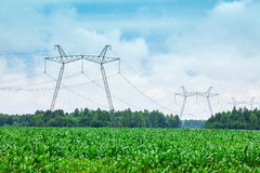 Green corn field and transmission line Royalty Free Stock Photo