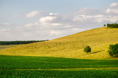 Green corn fields and forest on skyline. Stock Photography