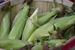 Green Corn Husks Stock Images