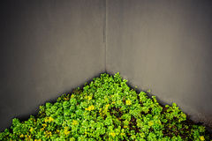 Green corner Royalty Free Stock Photo