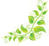 Green Corner Vine Royalty Free Stock Photo
