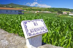 Green cornfield  Terceira near Agualva. Azores. Portugal. Horizo Stock Photos