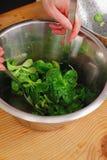 Green Cornsalad. Mache salad lettuce field corn stock image
