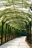 Green corridor Royalty Free Stock Photography
