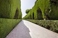 Green corridor Stock Images