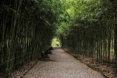 Green corridor with bench Royalty Free Stock Photography