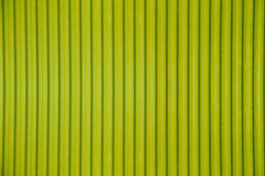 Green corrugated metal sheet texture background Stock Image