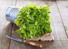Green cos lettuce on rustic wooden background Stock Photo