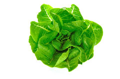 Green cos Salad. Green cos isolate on white background Stock Images