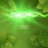 Green cosmetics background with green leaves. Vector eps10. Green cosmetics or medicine background with green leaves and morning dew. Vector eps10 Royalty Free Stock Image