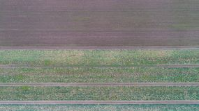Green country field with row lines, top view, aerial photo stock photos