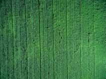 Green country field with row lines, top view Royalty Free Stock Photo