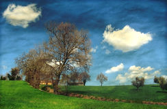 Green country landscape Royalty Free Stock Photo