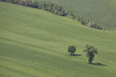 Green countryside Stock Images