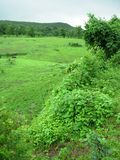 Green countryside landscape. Scenic view of lush green plants and fields in countryside Stock Photo