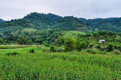 Green countryside in Luang Nam Tha, Laos. Green countryside in the village Luang Nam Tha, Northern Laos Stock Photography