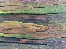 Green cover on old wooden and weathered planks Royalty Free Stock Image