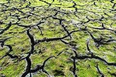 Green cracked ground Stock Image