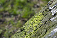 Green cracked wood Royalty Free Stock Image