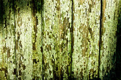 Green cracky texture Stock Image