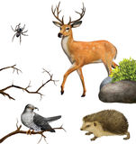 Deer, spider. hedgehog, cuckoo on a tree branches. Stock Images