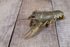 Green crayfish Stock Photo