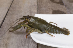 Green crayfish on the square plate Royalty Free Stock Images