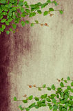 Green creeper plant. Growing on grunge wall Royalty Free Stock Photo