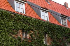 Green creeper plant on the brick wall. With windows and red roof and balcony Stock Photography